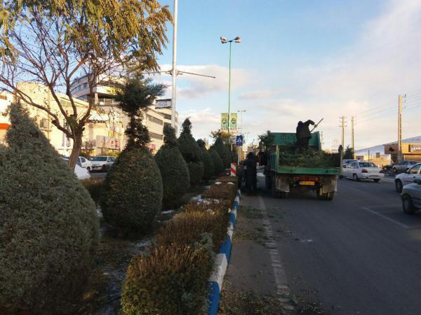 زیباسازی سروهای شهر پردیس توسط فضای سبز شهرداری پردیس