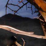 پارک ملی خجیر جاجرود