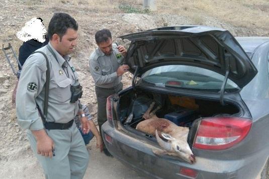 دستگیری گروه شکارچی غیرمجاز در پارک ملی سرخهحصار/ لاشه یک قوچ وحشی کشف شد
