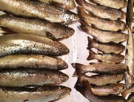 دستگیری صیاد غیرمجاز ماهی قزل آلای خال قرمز در دشت لار