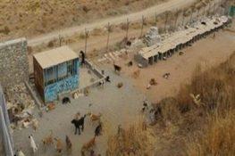 زندهگیری ۵۰۰ قلاده سگ ولگرد توسط شهرداری پردیس