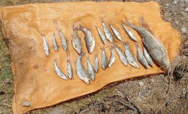 صید ماهی رودخانه هراز