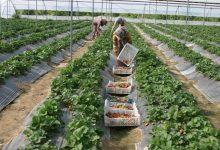 تصویر از ویلاهای تخریب شده در پردیس به گلخانه تبدیل میشوند