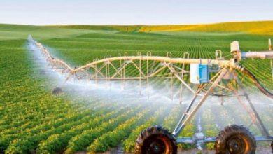 تصویر از ضرورت ورود شرکتهای دانش بنیان به بخش کشاورزی شهرستان پردیس