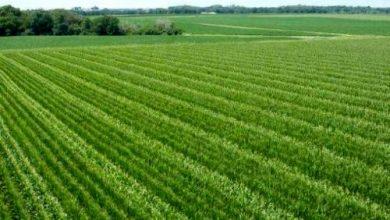 تصویر از پنجونیم هکتار از اراضی کشاورزی بخش جاجرود آزادسازی شد