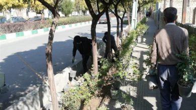 تصویر از آغاز عملیات کاشت گلهای پاییزی در فضای سبز شهر بومهن